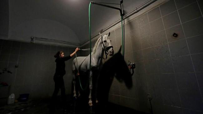 Saat itu kuda jantan dengan tubuh kuat dipandang sebagai simbol kekuatan Habsburg. (REUTERS/David W Cerny)