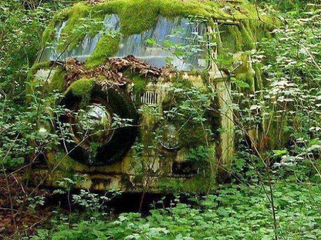 Mobil siapa ini yang terdampar di hutan?