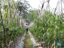 Dari Petani hingga Pedagang Bisa Ikut program DPLK BRI