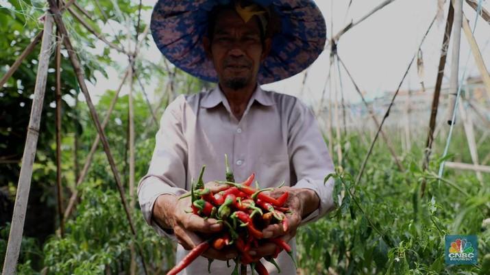 Cabai merah mengalami lonjakan harga di sejumlah pasar DKI Jakarta.