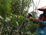 Miris! RI Krisis Petani, Cangkul 99% Impor & Manufaktur Loyo