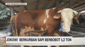 VIDEO: Presiden Jokowi Kurban Sapi Berbobot 1,2 Ton