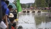 Ajang karapan kerbau ini berhadiah 3.000 baht (sekitar Rp1,3 juta). Kerbau yang menang karapan juga bisa dijual dengan harga lebih tinggi. (AFP Photo/Lillian Suwanrumpha)