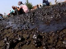 Ngeri! Wujud Pesisir Karawang yang Ternodai Minyak Pertamina