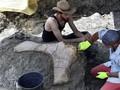 FOTO: Fosil Dinosaurus Raksasa Ditemukan di Prancis