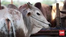 Kemendag Bakal Perjelas Ketentuan Halal Impor Hewan
