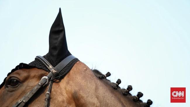 Kuda tunggangan yang beraksi di Indonesia Horse Show 2019 berasal dari Eropa. (CNN Indonesia/Hesti Rika)