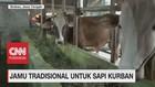 VIDEO: Jamu Tradisional Untuk Sapi Kurban