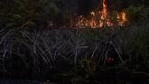 Api berkobar dari kebakaran lahan gambut di Desa Penarikan Kecamatan Langgam Kabupaten Pelalawan, Riau, 28Juli 2019. (ANTARA FOTO/FB Anggoro)