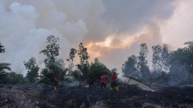 Sejumlah petugas pemadam kebakaran PT Riau Andalan Pulp and Paper (RAPP) berusaha memadamkan kebakaran lahan gambut di Desa Penarikan Kecamatan Langgam Kabupaten Pelalawan, Riau, 28Juli 2019. (ANTARA FOTO/FB Anggoro)