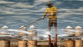 FOTO: Teriak Petambak Garam Karena Harga Tenggelam