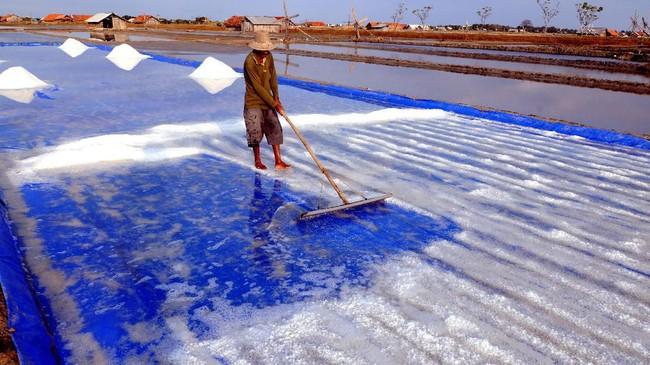 Menurut Luhut, Indonesia tidak membutuhkan garam impor, karena pemerintah tengah membangun industri garam nasional. (ANTARA FOTO/Saiful Bahri).