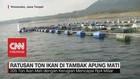 VIDEO: Ratusan Ton Ikan di Tambak Apung Mati