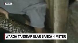 VIDEO: Warga Geger, Ular Sanca 4 Meter Masuk Rumah