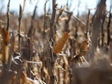 Krisis Petani di RI Apakah Benar-Benar Terjadi?