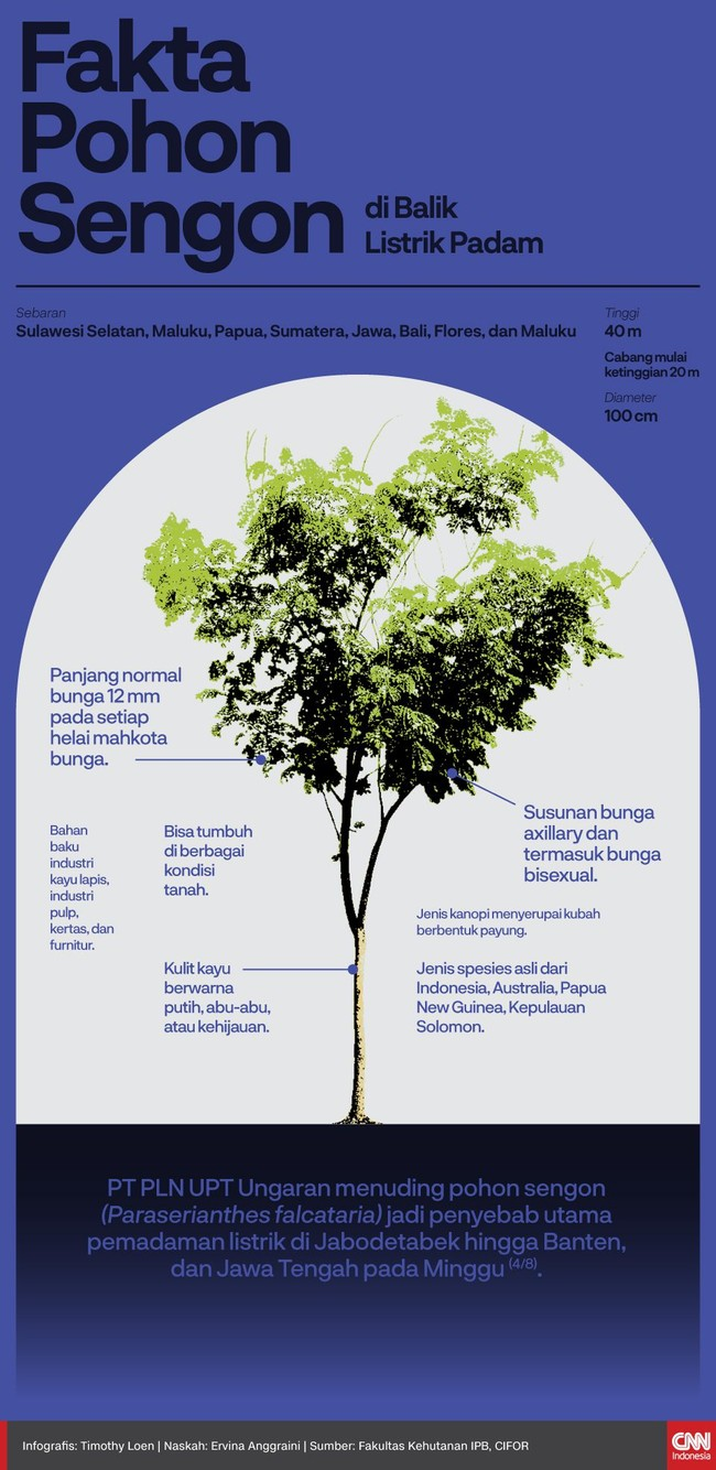 INFOGRAFIS: Fakta Pohon Sengon di Balik Listrik Padam
