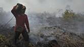 Petugas Manggala Agni Daops Kota Jambi berjibaku memadamkan api. Tampak seorang petugas membawa selang saat mengupayakan pemadaman kebakaran lahan gambut di Kumpeh Ulu, Muarojambi, Jambi. (ANTARA FOTO/Wahdi Septiawan)