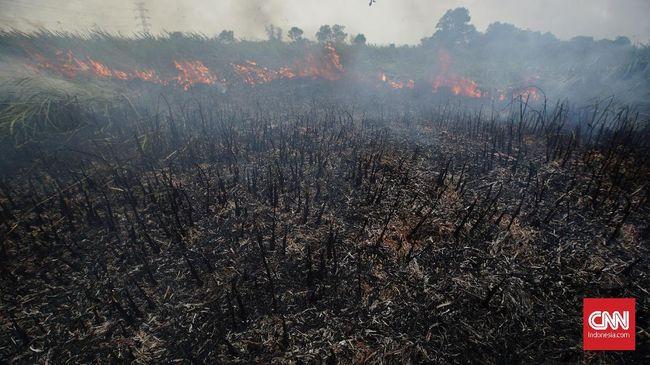 Lahan 2 Hektare di Kalbar Terbakar, Petani Jadi Tersangka