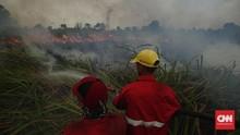 Anggota Manggala Agni Meninggal Saat Padamkan Kebakaran Hutan