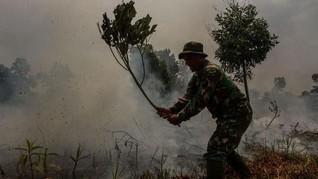 Pemerintah Segel 19 Konsesi di Kalbar Terkait Karhutla
