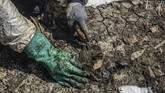 Petugas membersihkan sisa kebocoran minyak mentah Pertamina di kawasan ekosistem mangrove Desa Pantai Bahagia, Muaragembong, Kabupaten Bekasi, Jawa Barat, Selasa (6/8/2019). (ANTARA FOTO/Fakhri Hermansyah/wsj)