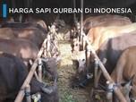 Intip Harga Sapi Qurban di Indonesia