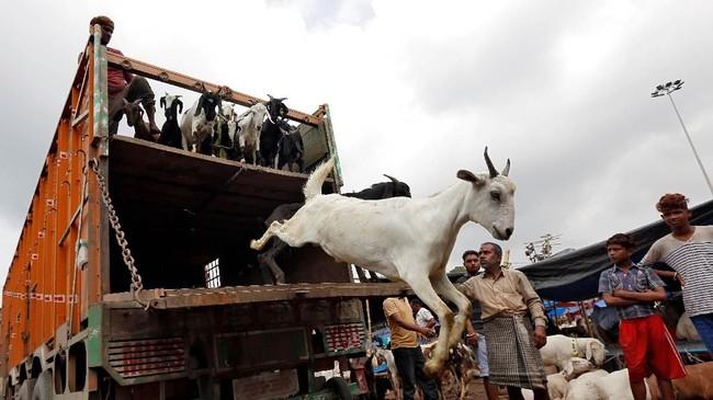Idul Adha menjadi salah satu momen penting dalam kalender Islam, menandai puncak perayaan haji.(REUTERS/Rupak De Chowdhuri)