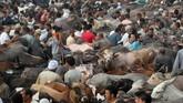 Penyembelihan hewan kurban berupa sapi, unta, kambing, atau domba menjadi penanda puncak perayaan Idul Adha. (REUTERS/Mohamed Abd El Ghany)