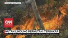 VIDEO: Hutan Lindung Perhutani Terbakar