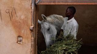 FOTO: Kuda-kuda di Khartoum Sudan yang Menanti Sunyi Pergi