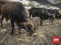 40 Gambar Mewarnai Binatang Kurban Gratis