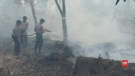 VIDEO: 2.500 Hektare Lahan Terbakar di Palangka Raya