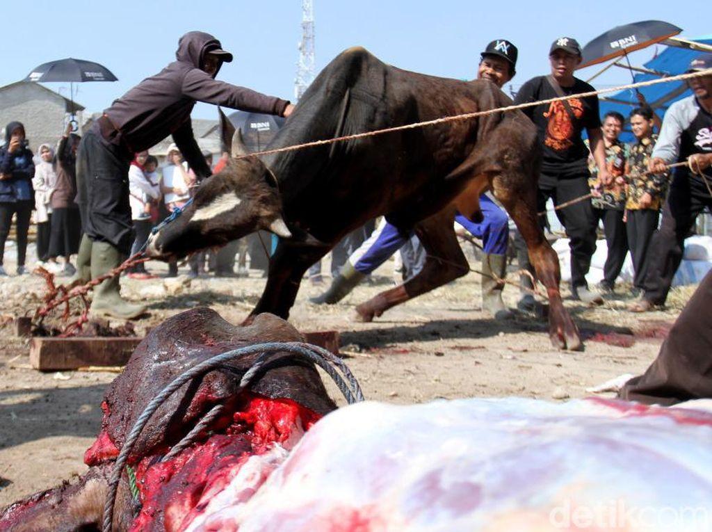 Lima sapi dan 26 kambing disembelih. Kegiatan ini diselenggarakan langsung oleh BNI Syariah yang bekerjasama dengan Islami Scientific School El Fitra Bandung dengan mengusung tema Qurban Ku Hasanah Ku.