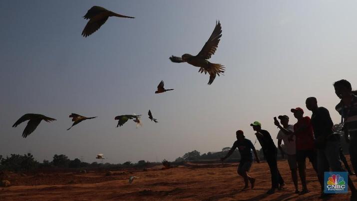 Tren Free Fly Burung Paruh Bengkok Terbang di Alam Bebas