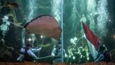 Sejumlah penyelam melakukan upacara bendera saat peringatan HUT Ke-74 Kemerdekaan RI di dalam akuarium utama Seaworld Ancol, Jakarta, Sabtu (17/8). (ANTARA FOTO/Aprillio Akbar/foc)