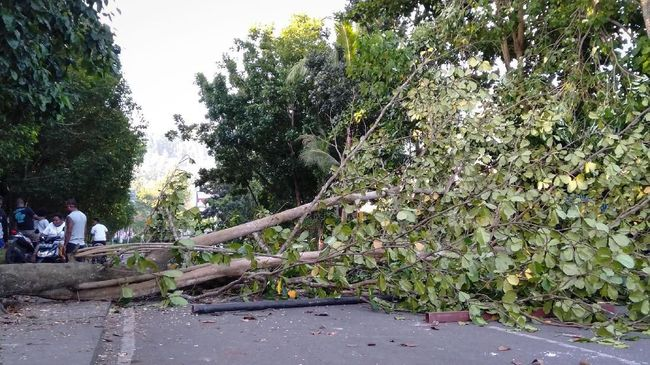 Pohon Tumbang Timpa Mobil di Jagakarsa, Satu Tewas