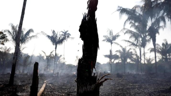 KLHK menyebut sudah ada empat perusahaan sebagai tersangka dari kasus kebakaran hutan dan lahan.