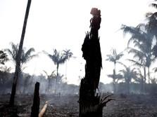 1 Perusahaan Singapura & 3 Malaysia Diduga Membakar Hutan