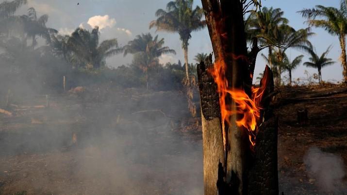 Amazon, hutan hujan tropis terbesar di dunia, adalah penyimpan karbon yang penting dalam memperlambat laju pemanasan global.