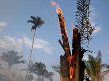 Duh, Kebakaran Hutan Amazon Setara 3x Lapangan Bola/Menit