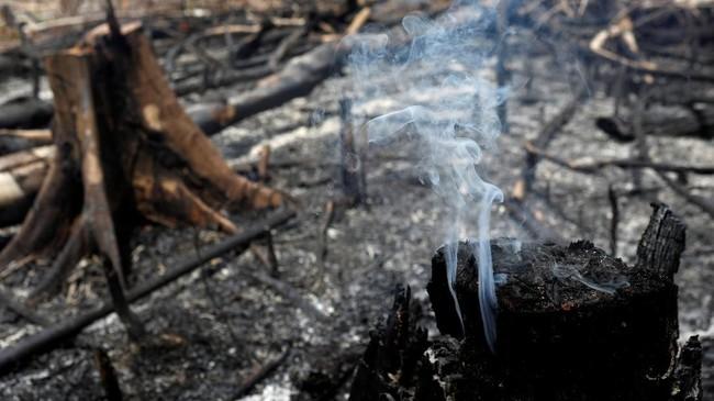Otoritas Amazon menetapkan status darurat di selatan Roraima dan Manaus sejak 9 Agustus lalu. (REUTERS/Bruno Kelly)
