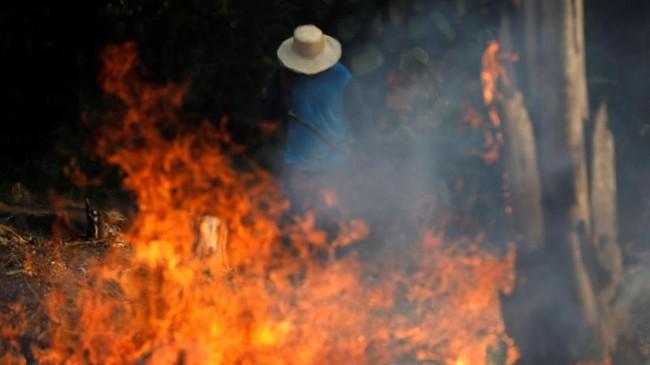 FOTO: Si Jago Merah Mengamuk di Hutan Amazon