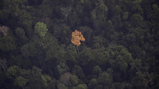 Kebakaran lahanyang melandahutan hujanAmazon di Brasil disebut telah mencapai rekor terparah tahun ini. (REUTERS/Bruno Kelly)