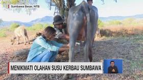 VIDEO: Menikmati Olahan Susu Kerbau Sumbawa