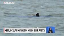 VIDEO: Kemunculan Kawanan Hiu di Perairan Bali