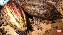 Ransiki, Cokelat Persaudaraan dari Tanah Papua