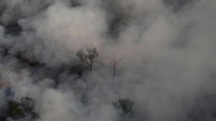 Hutan hujan Amazon yang terletak di Brazil telah mengalami kebakaran parah selama beberapa hari terakhir
