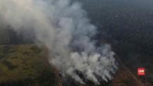 VIDEO: Melihat Langsung Si Jago Merah di Hutan Amazon