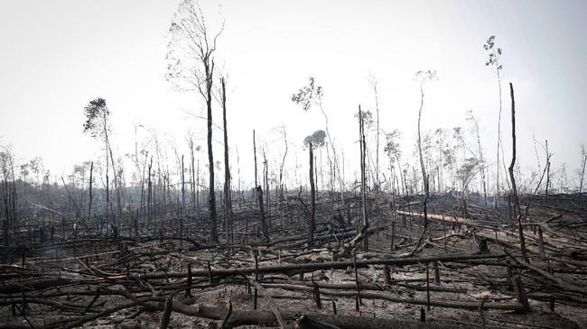 Selama 20 tahun terkahir suku Mura memperjuangkan tanah di sekitar desa mereka yang dibatasi sebagai cagar alam Amazon.(REUTERS/Ueslei Marcelino)