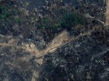 Duh, Hutan Amazon Membara karena Kebakaran Hutan